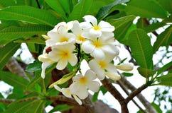 Blomma i thai tempel Fotografering för Bildbyråer
