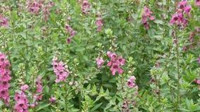 Blomma i trädgård stock video