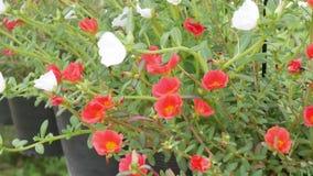 Blomma i trädgård lager videofilmer