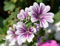 Blomma i trädgård royaltyfri fotografi