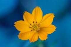 Blomma i trädgård Royaltyfria Foton