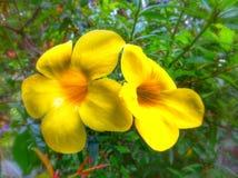 Blomma i trädgård royaltyfri foto