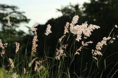 Blomma i trädgård Arkivbild