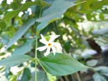 Blomma i trädgård Royaltyfria Bilder
