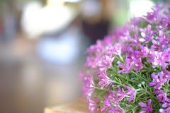 Blomma i trädgård Arkivbilder