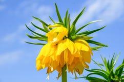 Blomma i trädgård från tjeck Royaltyfri Bild