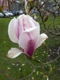 Blomma i trädgårdar av Treenighethögskolan royaltyfria bilder