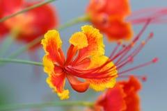 Blomma i trädgården Arkivbild