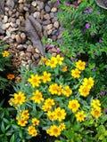 Blomma i trädgården royaltyfria bilder