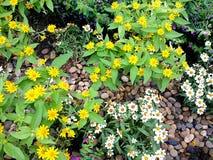 Blomma i trädgården arkivfoto