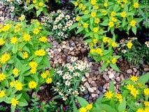 Blomma i trädgården Royaltyfri Bild