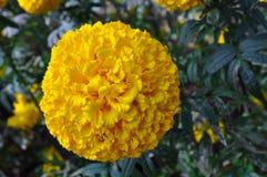 Blomma i trädgården Royaltyfri Fotografi