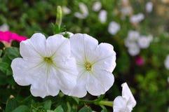 Blomma i trädgården Fotografering för Bildbyråer