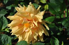 Blomma i trädgården Arkivfoton