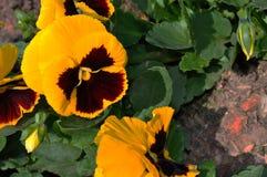 Blomma i trädgården Arkivbilder