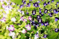 Blomma i trädgården Royaltyfri Foto