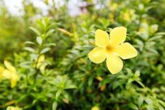 Blomma i trädgården Royaltyfria Foton