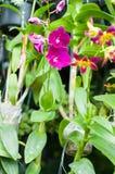 blomma i trädgården, härliga färgrika blommor som växte med det naturligt Royaltyfri Foto