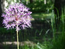 Blomma i trädgårdmicroen royaltyfri fotografi