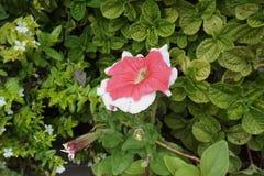 Blomma i tr?dg?rden fotografering för bildbyråer