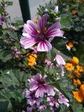 Blomma i universitetsområde Royaltyfri Fotografi