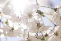Blomma i vår arkivbilder