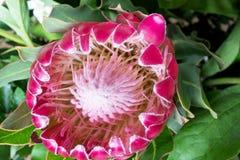 Blomma i vår trädgård Fotografering för Bildbyråer