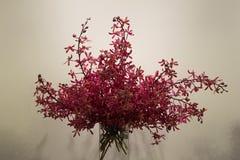 Blomma i vase arkivbilder
