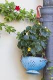 Blomma i vasen Arkivfoto