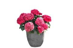 blomma isolerad kruka royaltyfria bilder