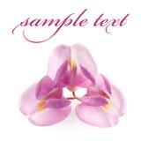 blomma isolerad pink royaltyfri foto