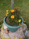 blomma isolerad ringblommawhite Arkivbild