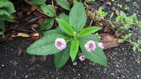 blomma isolerad white Royaltyfria Bilder