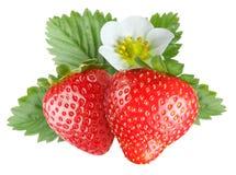 blomma jordgubbar Arkivfoto