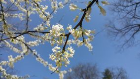 Blomma knoppar Arkivbild