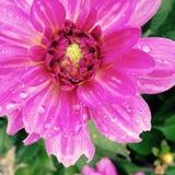 Blomma knoppen Royaltyfria Foton