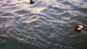 Blomma korgar som svävar i floden Ganga i Indien under puja lager videofilmer