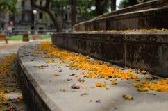 Blomma kronblad på en trappuppgång i en parkera Arkivbilder