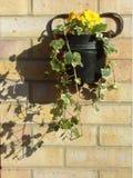 blomma krukan Royaltyfria Bilder