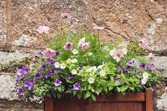 Blomma lägger in blommor i en stor utomhus- planter Arkivbilder
