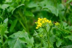 Blomma l?sa blommor p? ett gr?nt gr?s fotografering för bildbyråer