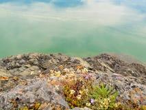 blomma lakeshore steniga vildblommar arkivfoto