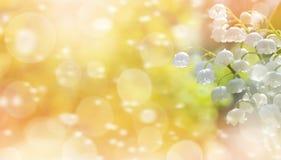 blomma liljadal Royaltyfria Bilder