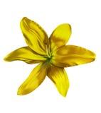 blomma lilly stock illustrationer