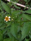 blomma little arkivfoton
