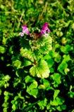 blomma little arkivfoto