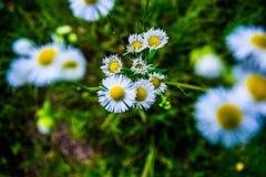 blomma little Arkivbild