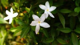 blomma little Royaltyfri Bild