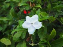 blomma little Royaltyfria Foton