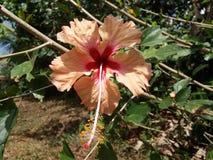 blomma little fotografering för bildbyråer